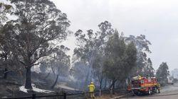 Las elevadas temperaturas avivan los graves incendios forestales en