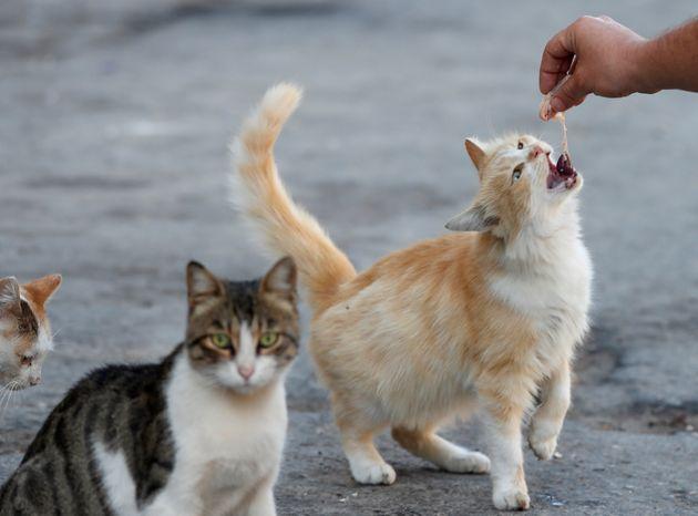 Συρία: Η πόλη που φιλοξενεί περισσότερες γάτες απ' ότι