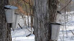 Montérégie: plusieurs incendies criminels dans des fermes et des cabanes à