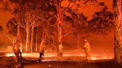 Les images saisissantes des feux de forêt en