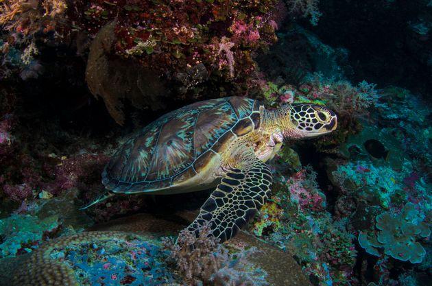 Palau est un véritable bijou de la nature, avec des fonds marins richissimes, mais malheureusement...