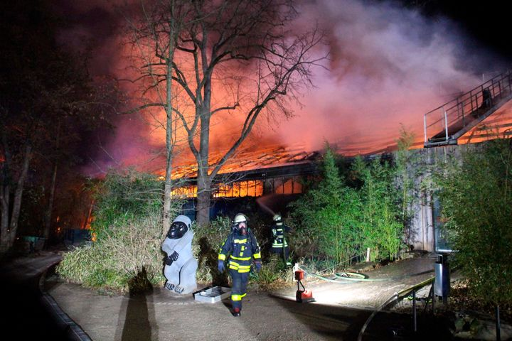 A fire at a zoo in western Germany killed a large number of animals in the early hours of the new year, authorities said.