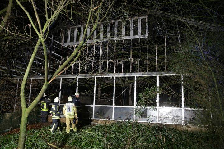 The zoo near the Dutch border said that the entire ape house burned down and more than 30 animals, including five orangutans, two gorillas, a chimpanzee and several monkeys, as well as fruit bats and birds, were killed.