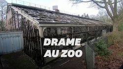Des dizaines de singes meurent dans l'incendie d'un zoo en