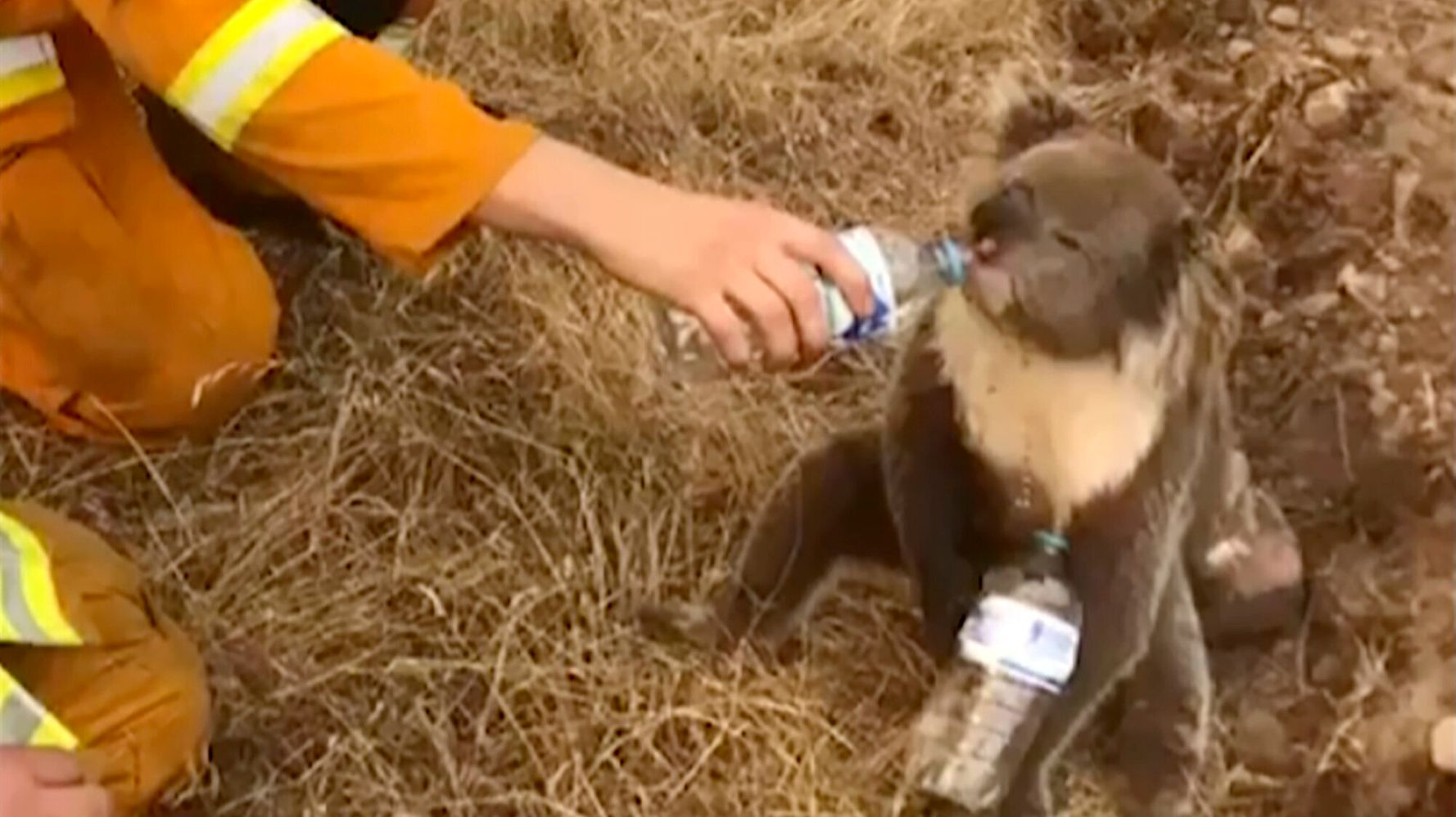 Nearly Half A Billion Animals Feared Dead In Australian Wildfires