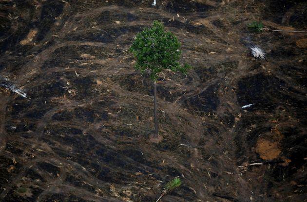 Área devastada por queimadas perto de Porto Velho, Rondônia, em setembro de