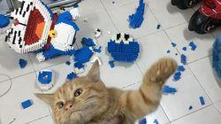일주일 걸려 만든 피규어를 고양이가 박살냈다