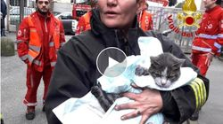 Lampo ce l'ha fatta. Vigili del fuoco rianimano e salvano il gatto dopo l'incendio