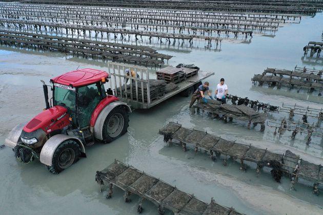 En Bretagne sud, les huîtres sont victimes du virus de la gastro-entérite (image