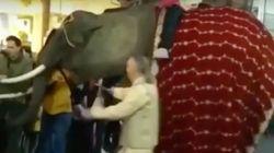 Un elefante golpea al alcalde de Medina del Campo y tira a varios niños durante una