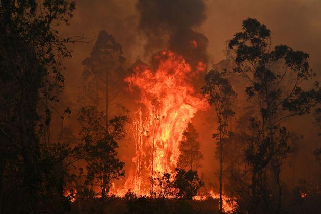 시드니 북쪽 350킬로미터의 마을 보빈에서 불길이 치솟고 있다. 소방수들은 뉴사우스웨일스 수십 곳에서 통제불가능으로 번지는 불꽃과 맞서고 있다. 11월