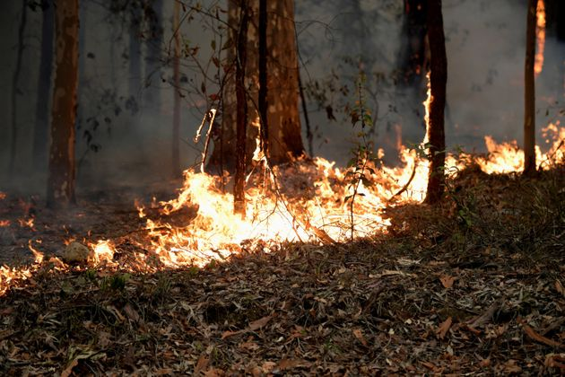 De acordo com ecologistas da Universidade de Sydney, os incêndios na Austrália já...