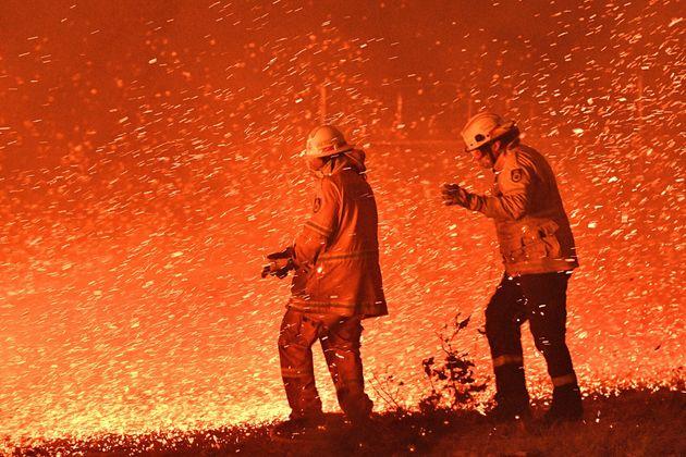 オーストラリアの森林火災の悲惨さ。最大8000頭のコアラが犠牲に(画像集)