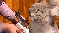 Koala Mittens And Joey Pouches: Australian Wildfires Spark Global Knitting