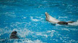 BLOG - Exhiber les dauphins aussi sensibles qu'intelligents en France au XXIe siècle n'est plus