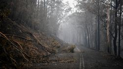 Cost Of Australia Bushfires Mount: 'Very Significant Economic