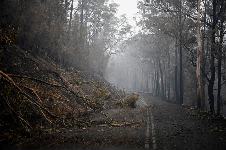 Fallen trees partially block roads in the fire-grounds near Eden, Australia January 7, 2020. REUTERS/Tracey Nearmy