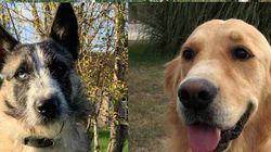 Ces 11 chiens que vous avez vus au cinéma ont péri dans un