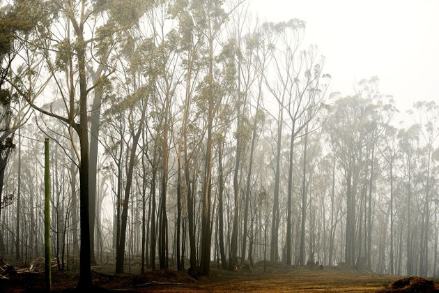 Συνεχίζεται η μάχη με τις φλόγες στην Αυστραλία - Οι καπνοί έφθασαν πάνω από τη Χιλή και την