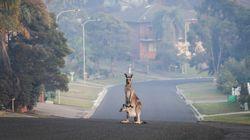 Qué puedes hacer tú mientras Australia