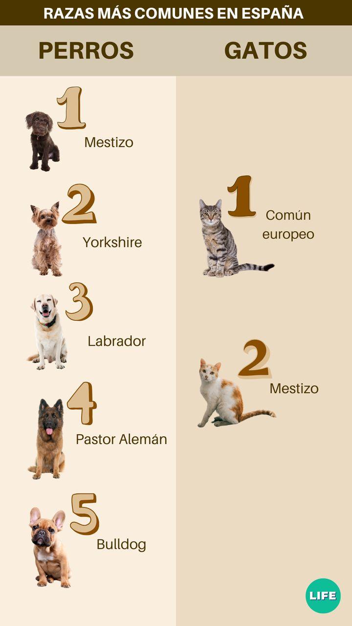 Ranking de razas de perros y gatos más populares.  Fuente: Tiendanimal.es