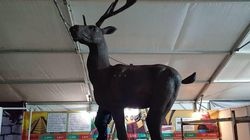 Κατερίνη: Σοκολατένιο ελάφι 120 κιλών πάει για ρεκόρ