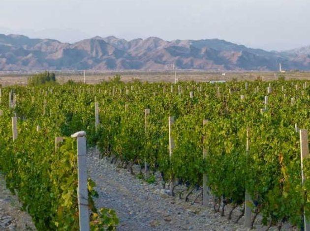 Ningxia, el paraíso del vino