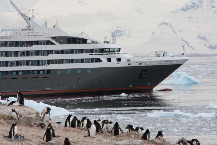 Des centaines de milliers de manchots, pas des pingouins!