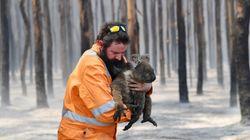 Solidaridad internacional para salvar a los animales de los incendios de