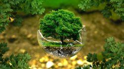Trabajar en medio ambiente, ¿una buena opción de