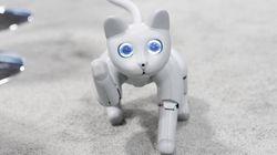 プログラマブルな猫「Meet