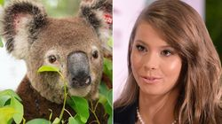 Bindi Irwin Shares Update On Bushfire-Affected Koala Who Is 'On Road To