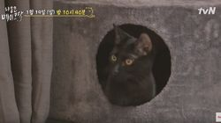 '냐옹은 페이크다'가 결국 고양이를 보호소에