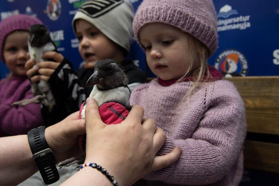 Sandra Sif Sigvardsdóttir tend un bébé macareux à sa plus jeune fille, Eva Berglind, 2 ans, assise aux...