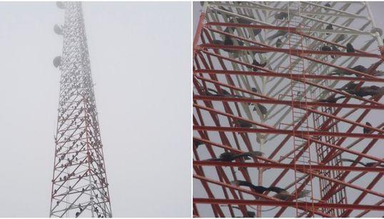 Ορνεα μετέτρεψαν κεραία τηλεπικοινωνιών στο Τέξας σε