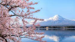 Ιαπωνία: Γιατί οι περίφημες κερασιές θα ανθίσουν νωρίτερα το