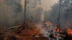 Redes criminosas na Amazônia 'têm carta branca' sob Bolsonaro, diz relatório da