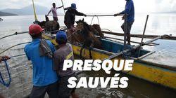 Face au volcan Taal, des habitants ont risqué leur vie pour sauver leurs