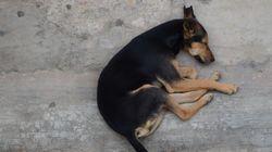 O θάνατος βρέφους από σκύλο φέρνει στο προσκήνιο το τεράστιο πρόβλημα της Ινδίας με τα