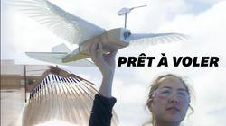 Ce pigeon robot pourrait enfin nous apprendre à voler comme les