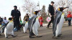 Un zoo canadien annule sa
