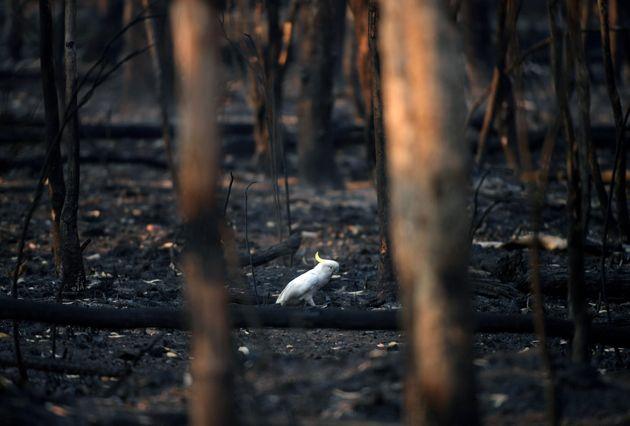 Παγκόσμιο Οικονομικό Φόρουμ: Η κλιματική αλλαγή στην κορυφή των ανησυχιών του πλανήτη για πρώτη