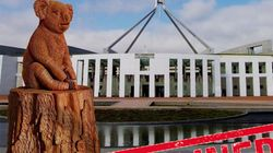 Australian Parliament Rejects 'Lewis The Koala' Statue Honoring Fire