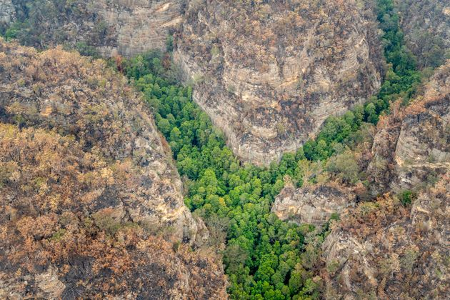 In Rare Good News, Australia Says Endangered 'Dinosaur Trees' Saved From Devastating Fires