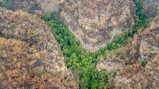 In Seltenen Guten Nachrichten, Australien, Sagt Vom Aussterben Bedroht