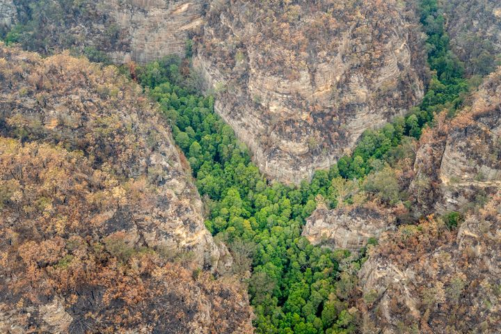 The Australian government has kept the location of the native Wollemi pines secret after they were discovered in 1994.