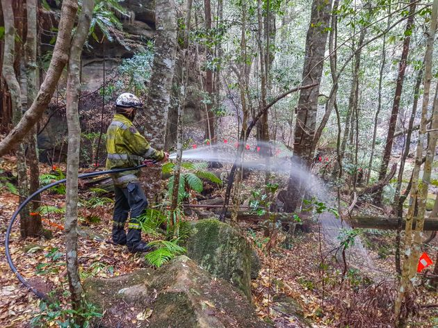 Firefighters water-bombed the region that's home to the pines and ventured to a remote canyon to protect...
