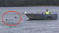 Bystander Stops Kangaroo From Drowning Dog: 'If I Wasn't There, That Dog Was