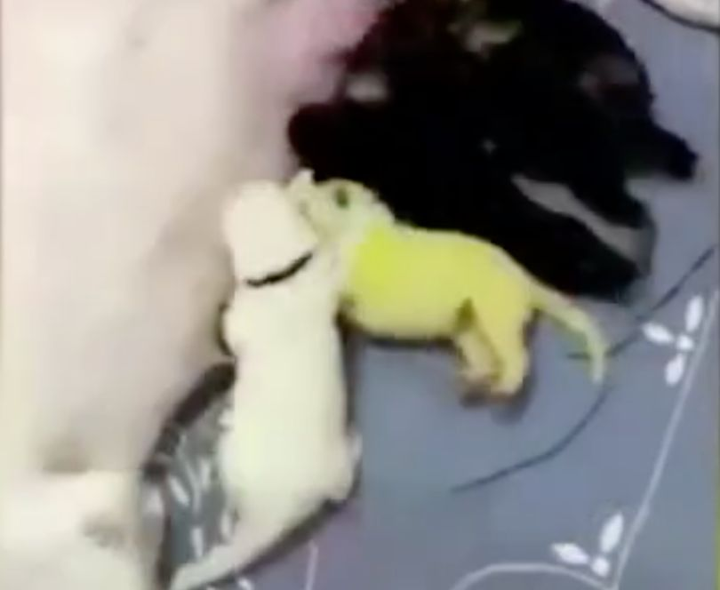 Dog Gives Birth To Green Puppy, ...