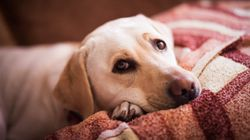 Spotify veut déstresser vos chiens